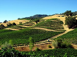 Vineyards in the Sonoma County wine region of ...