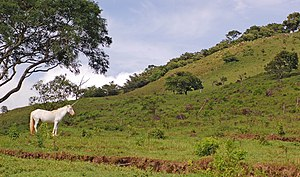Costa Rica Unicorn 2800px