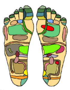 An example of  reflexology chart demonstrating the areas feet that practitioners believe correspond with organs in zones body also wikipedia rh enpedia