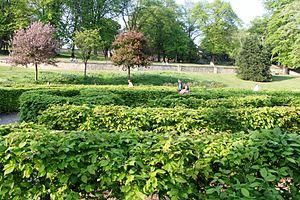 English: The hedge maze in Lincoln Arboretum