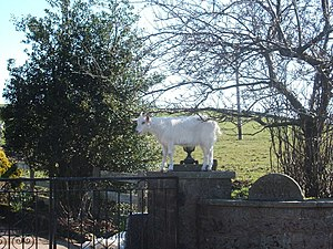 English: Mountain goat Delusional goat, preten...