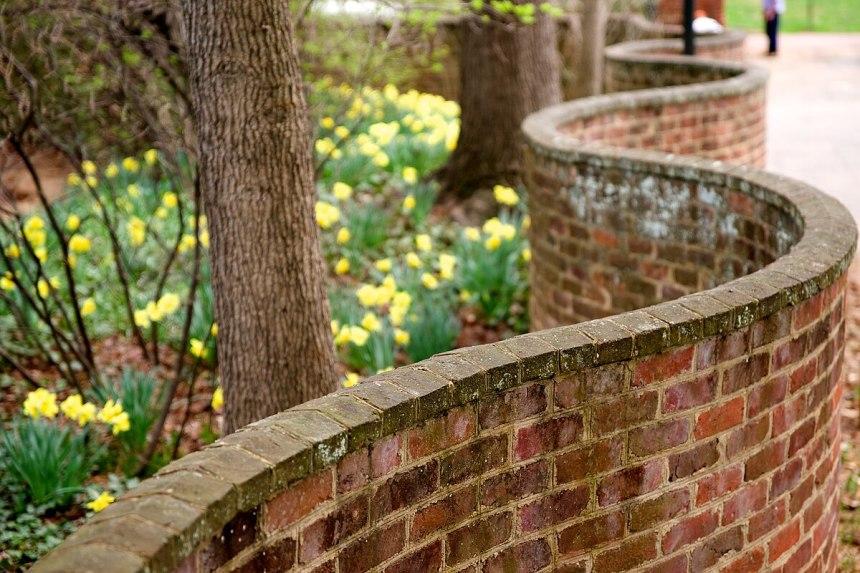 Serpentine wall UVa daffodils 2010.jpg