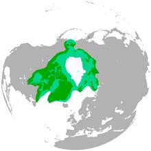 Persebaran beruang kutub