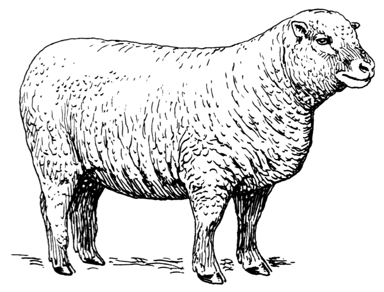 File:Sheep (PSF).png
