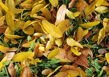 An autumn ground with fallen leaves and grass ...