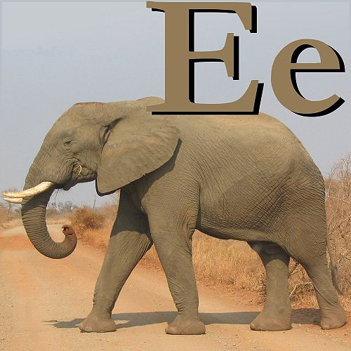 500px-E_is_for_Elephant.jpg