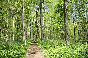 Trail in Turkey Run State Park, Indiana, USA F...