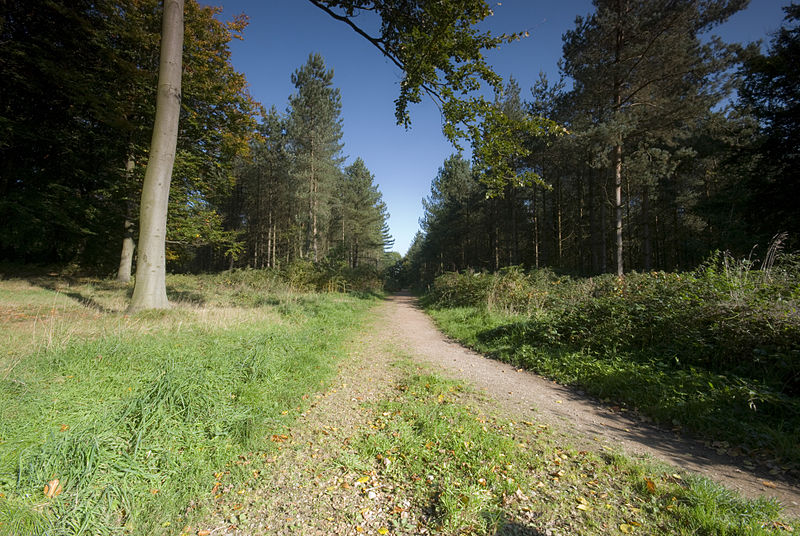 File:Cannock Chase Path.jpg