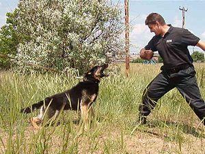 Українська: Дресирування собак