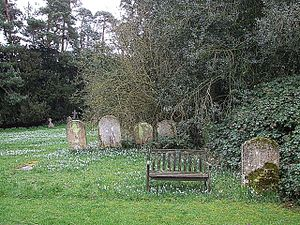 English: Snowdrops & Bench The bench really ou...