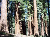 Bosque Gigante.jpg