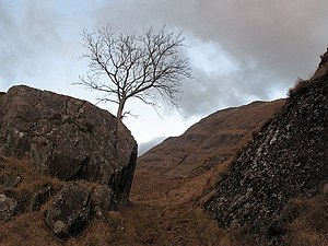 Between a rock and..... A tree finds refuge on...