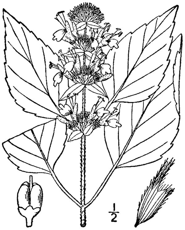 Flora of Georgia (U.S. state)