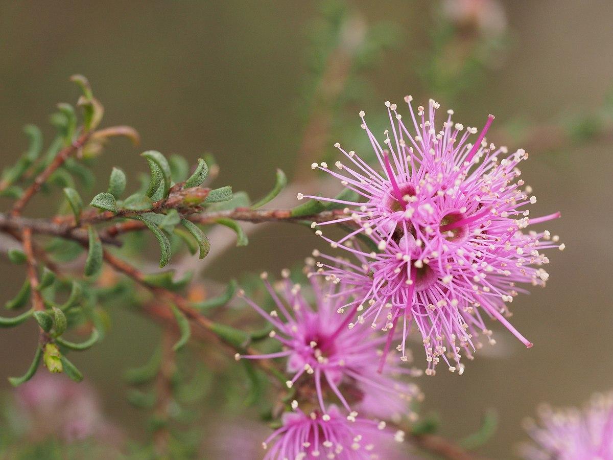 Kingdom Plantae Taxonomy Plants