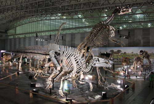 Laika ac Dino Kingdom 2012 (7882291466).jpg