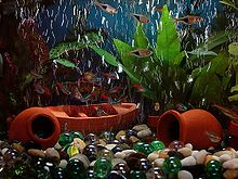 Photo displaying plants, small fish, and what appear to be tipped-over orange vases