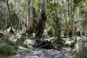 The Australian bush, a major influence and cen...