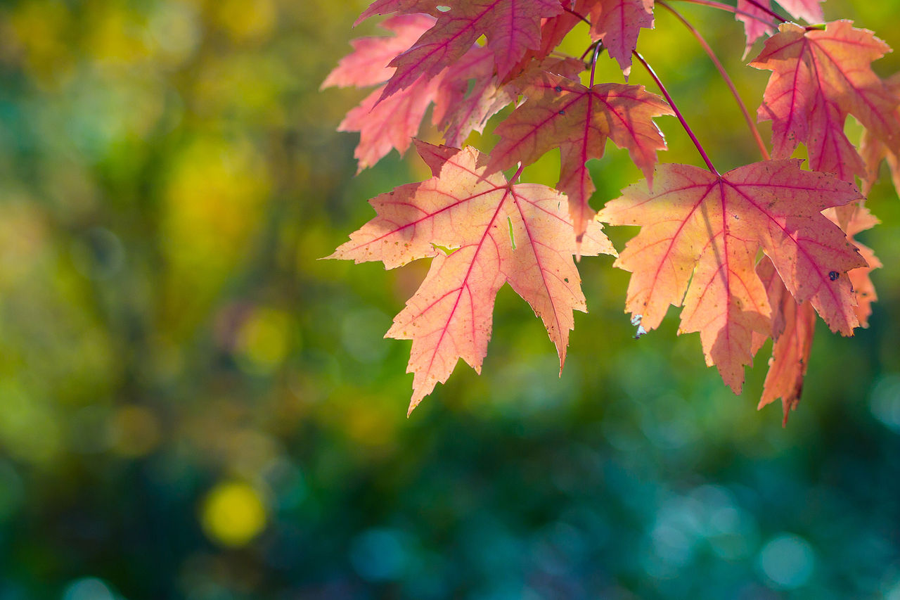 Free Fall Season Desktop Wallpapers File Fall Sun Leaves And Bokeh 6321333937 Jpg