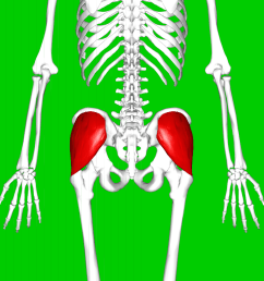 split femur diagram [ 1200 x 1200 Pixel ]