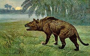 Hyaenodontidae Wikipdia