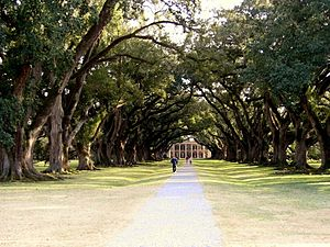 Photograph of Oak Alley Plantation in Vacherie...