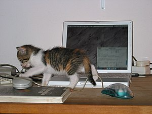 cat and powerbook