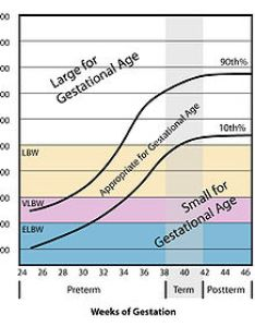 Small for gestational age weight vs also wikipedia rh enpedia
