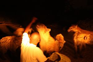 Nightly feeding of the hyenas, Harar, Ethiopia.