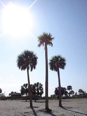 Palm Trees with Sun Behind Them