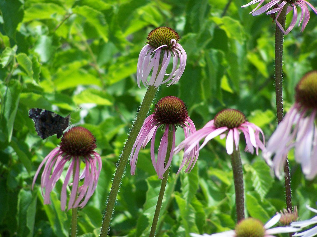 Native York New Plants