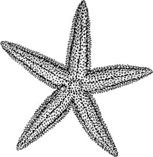 Line art representation of a Starfish