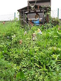 Garden Gnome Liberationists Wikipedia