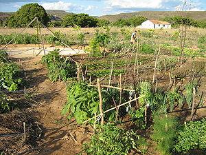 Mandala irrigation