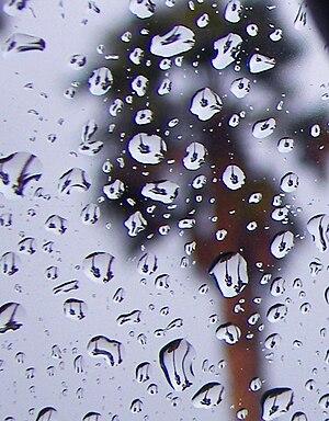 Palm trees as seen through many raindrops