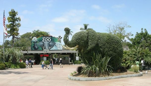 Top Things to Know about the San Diego Zoo - Points of Interest