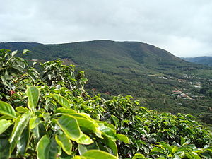 English: Coffee farms in San Marcos Tarrazu