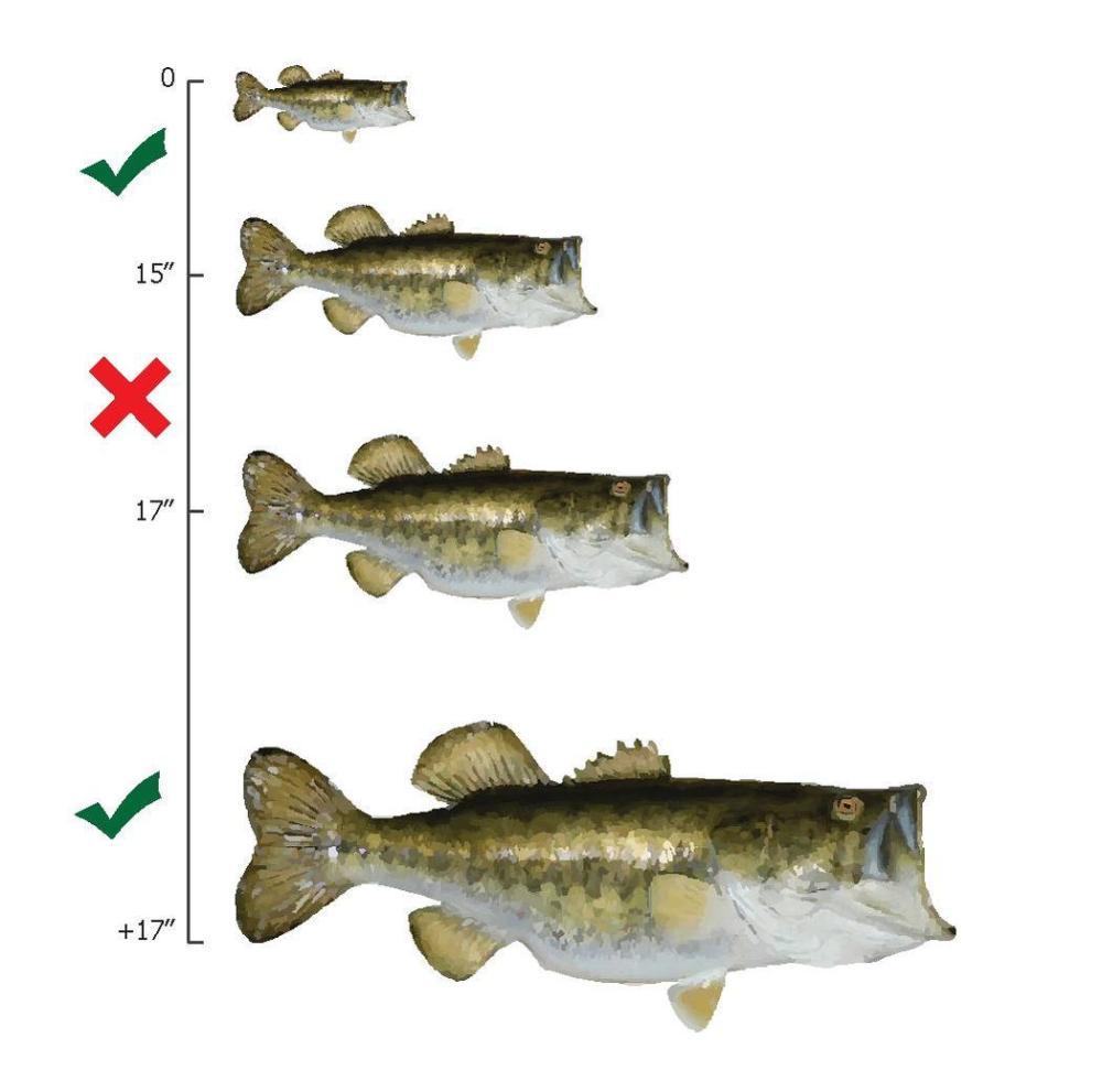 medium resolution of file largemouth bass slot limit diagram pdf