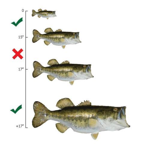 small resolution of file largemouth bass slot limit diagram pdf