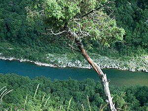 Français : La rivière Ardèche. Deutsch: Die ro...