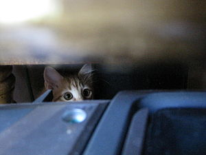English: Kitten hiding behind some stuff in ou...