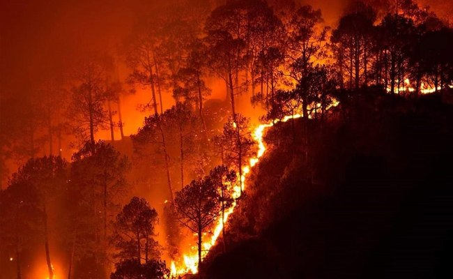 2019 Bandipur Forest Fires Wikipedia