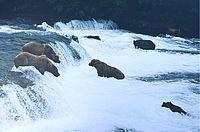 ヒグマの小川falls.jpg