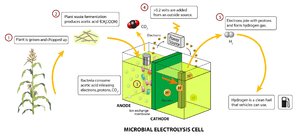 A schematic of a microbial electrolysis cell.