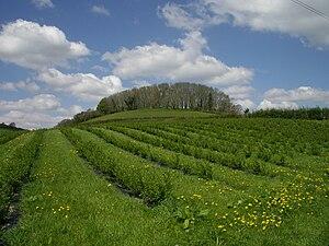 English: Riverford farm