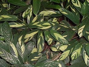Description de l'image Forraçao2.jpg.