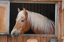 Sauro cavallo  Wikipedia