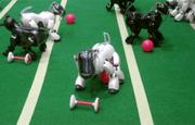 Competizione tra cani robot