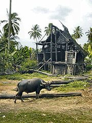 Kerbau di Indonesia