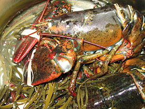 Lobsters shipped for consumption in the United...