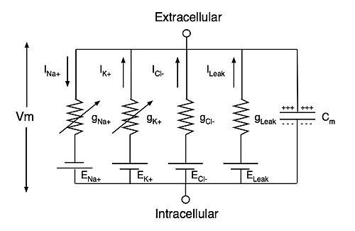 Sensory Systems/Computer Models/NeuralSimulation